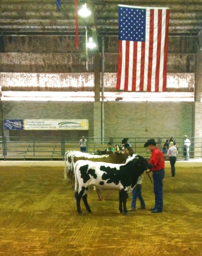 In the show ring for Peewee