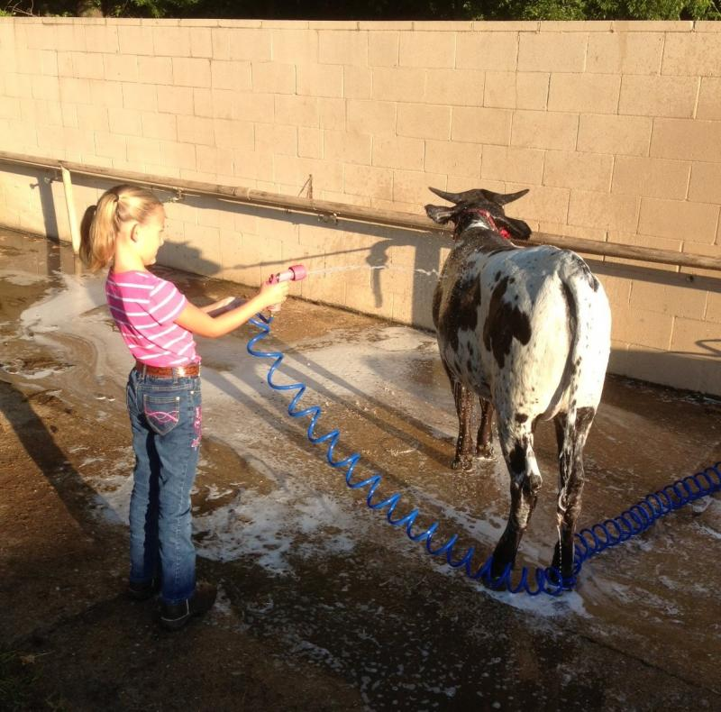 Avery washing cows!!
