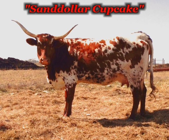 Sanddollar Cupcake:  2013 World Grand Champion and dam to R4 Carrot Cake