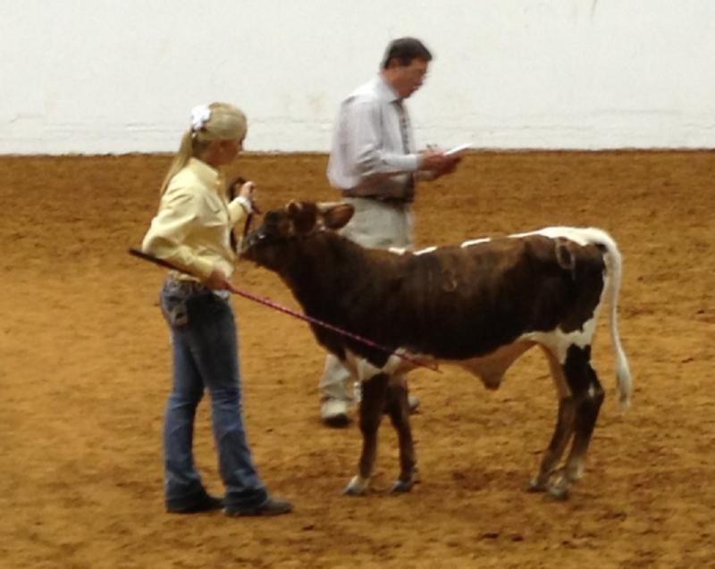 Jamie Carpenter showing R4 Xtreme in the bull show