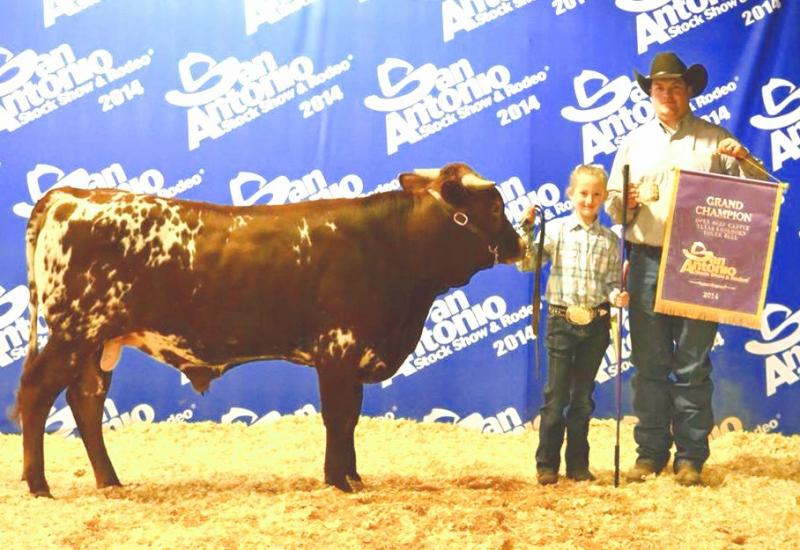 R4 Mr. B:  Grand Champion Bull at the San Antonio Livestock Expo 2014