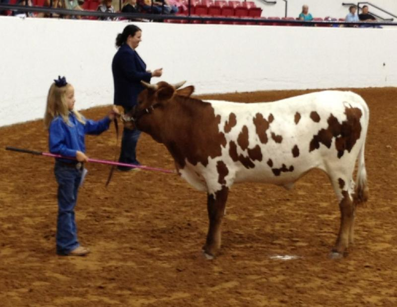 Avery and Wolverine in thier first showmanship class ever!!