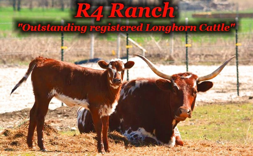 Welcome to the R4 Ranch in Krum, TX