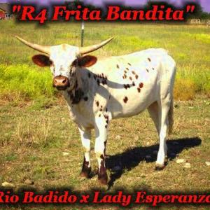 Frita Bandita is for sale!