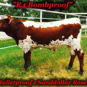 Rr Bombproof