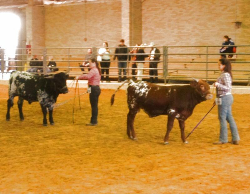 Bull Championship