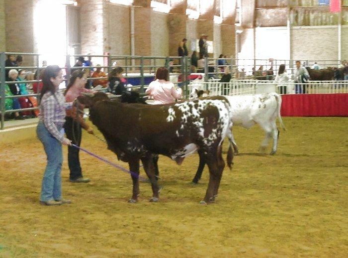Open Bull class
