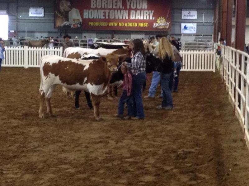 Peewee Showmanship with Amy and JP