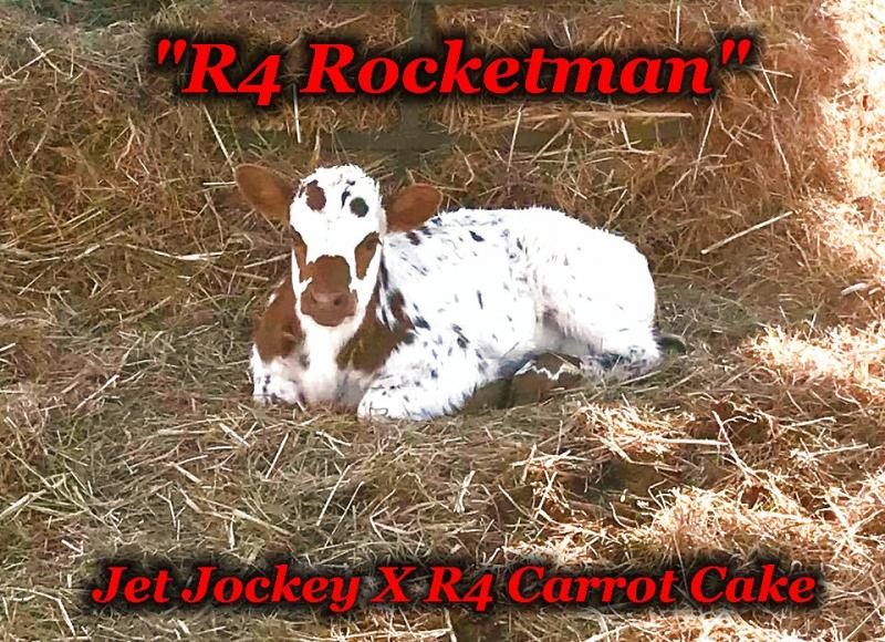 R4 Rocketman: Jet Jockey x R4 Carrot Cake