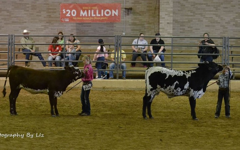 Showmanship with the kids